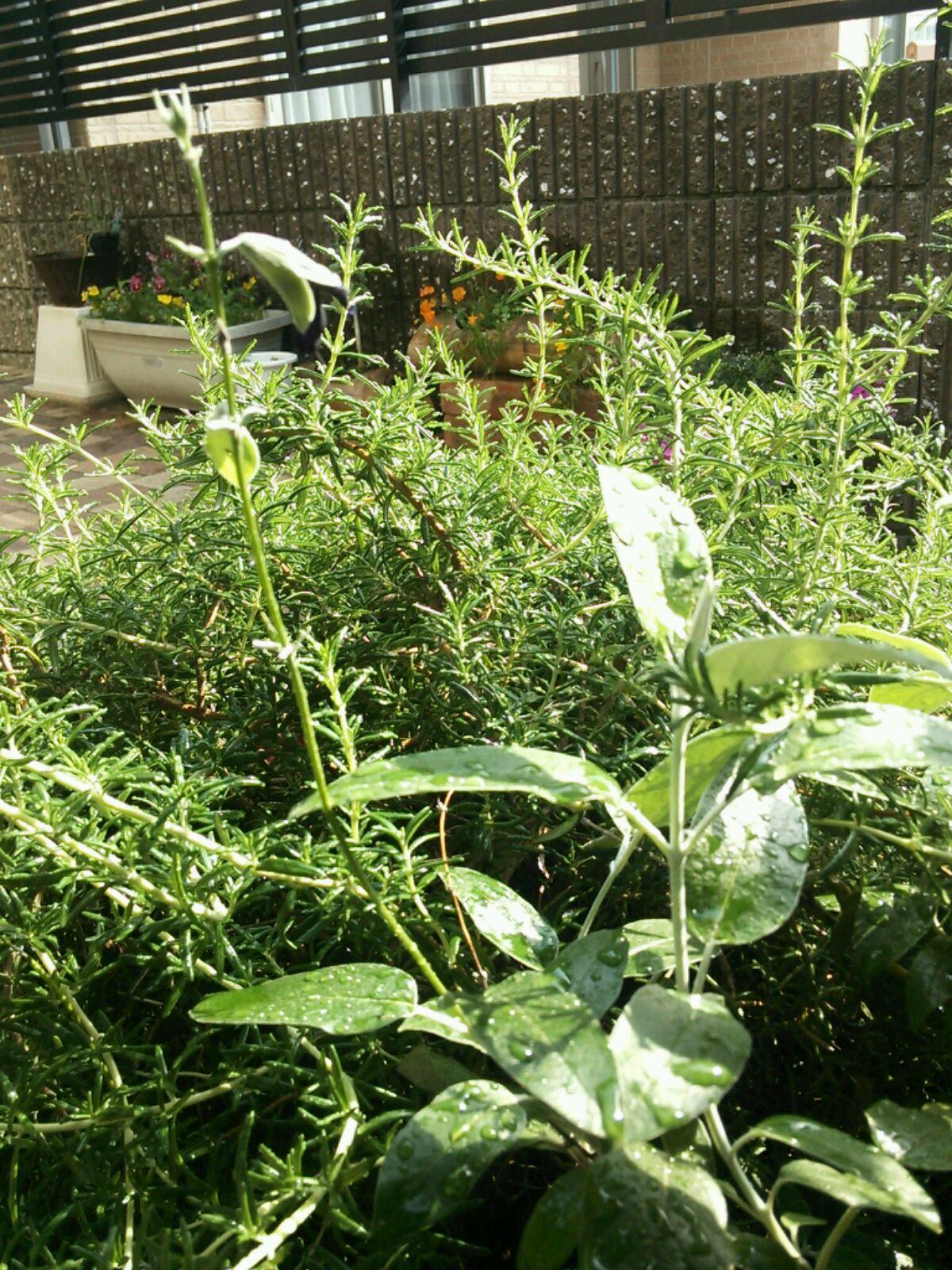 おうちの植物たち
