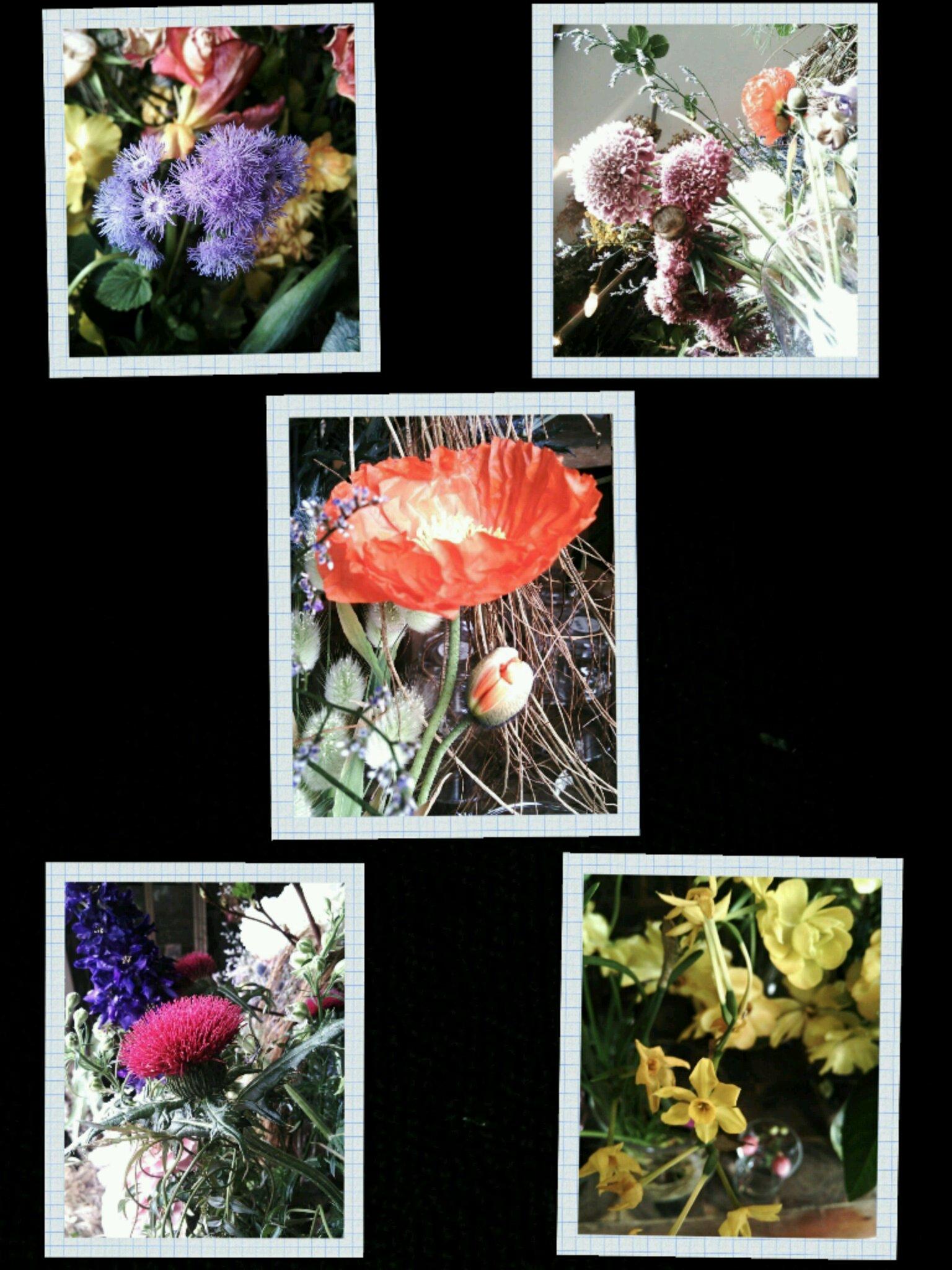 boisさんの植物たち