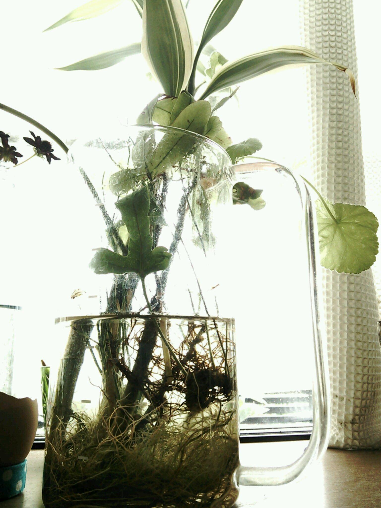 植物増えました♪