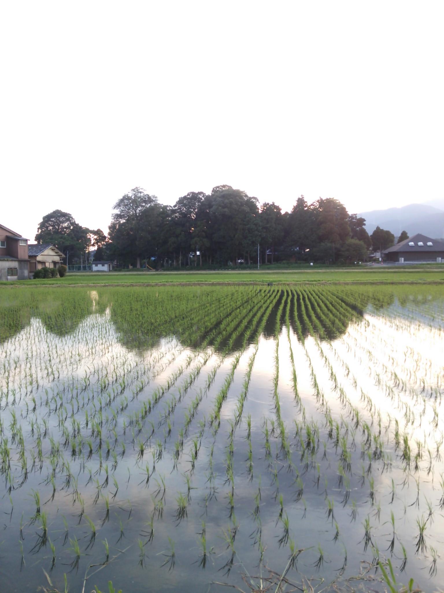 水田のある風景